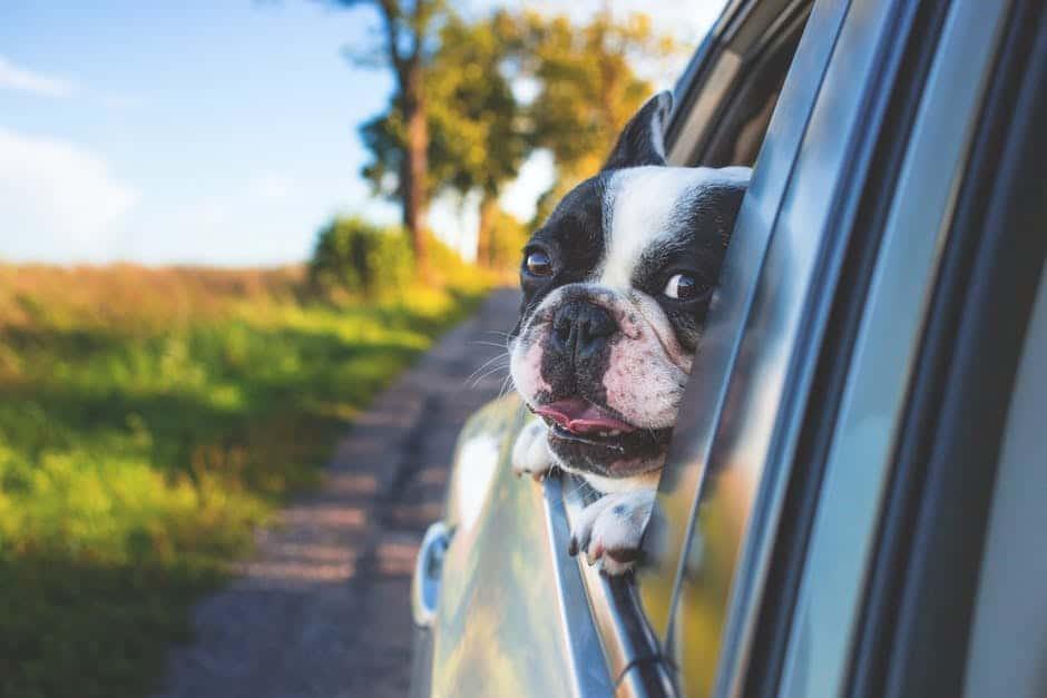 Cestovní pas pro psy a jiná domácí zvířata